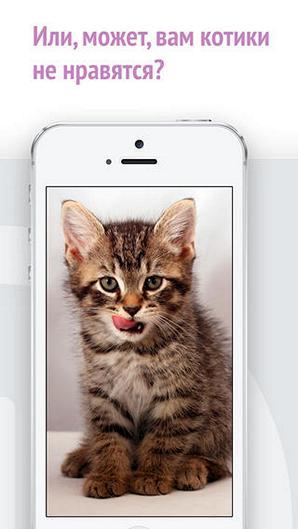 Бесплатная игра «Найди кота!» для iPhone – ищем котиков на скорость