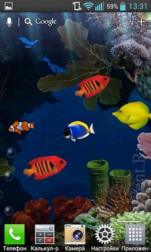 Живые обои Aquarium: яркие рыбки